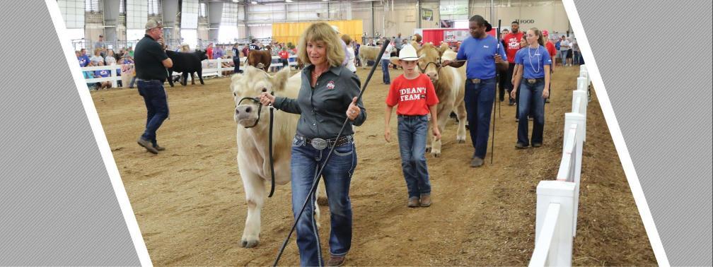 Dean Cathann A. Kress showing a steer