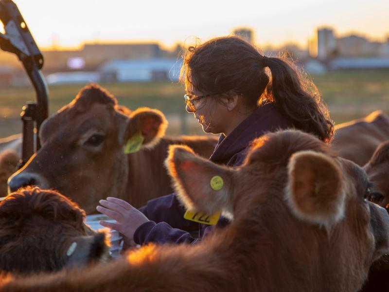 Laura Tavera with cows at Waterman