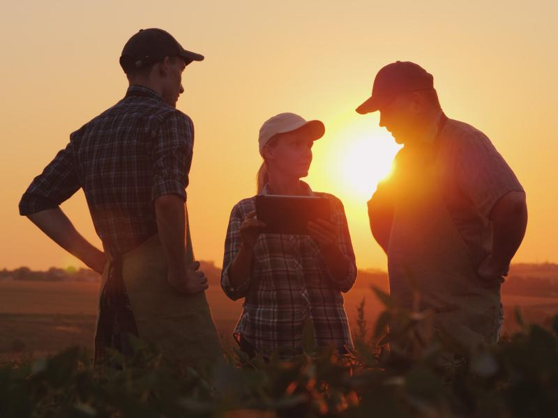 Farmers in field at sunset